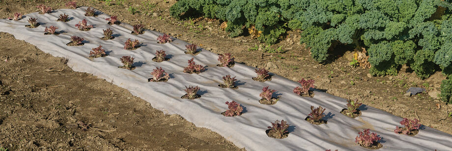 Biodegradable Mulch