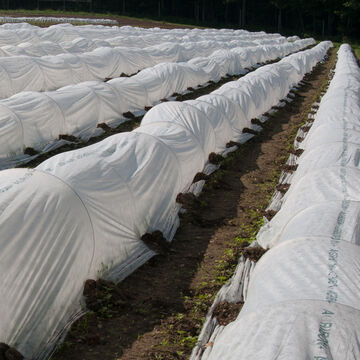 Protect Crops with Row Cover