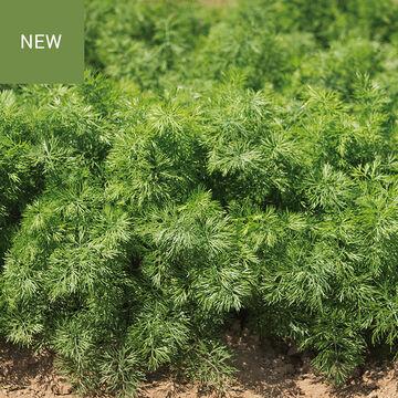 NEW Herbs