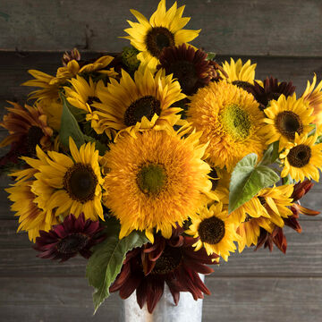 Sunflowers for Every Grower