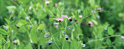 Build Your Soil with Fall & Winter Cover Crops
