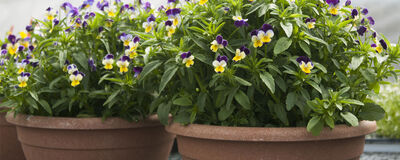 Discover Container-Friendly Varieties