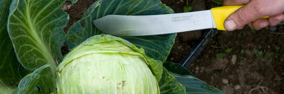 Harvest Knives