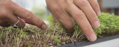 Microgreens: Grow Fast, Strong & Healthy