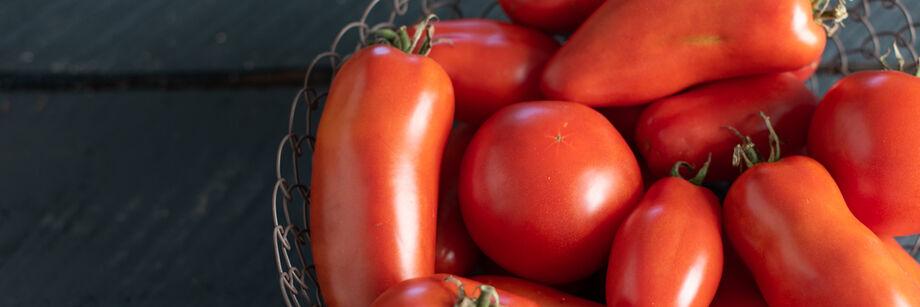 2019年蔬菜新品种betway体育投注