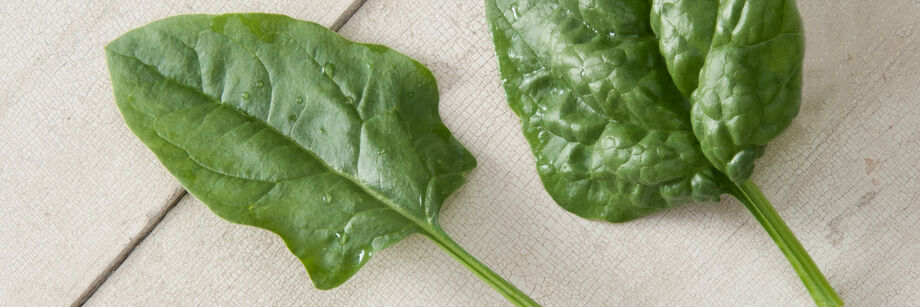 Arrowhead Spinach (Asian-leaf)
