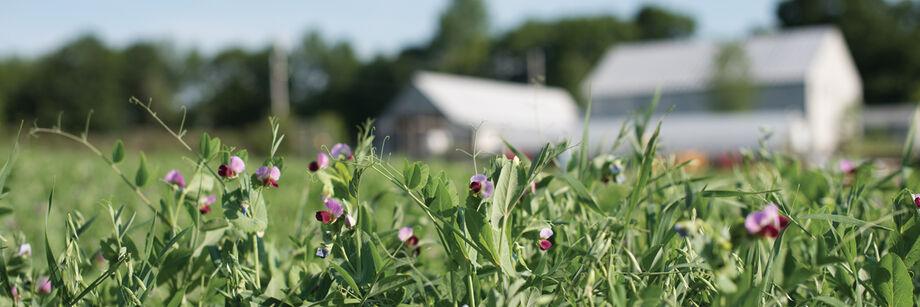 Farm Seed