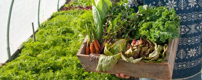 Here's What to Plant for the Upcoming Winter Harvest…