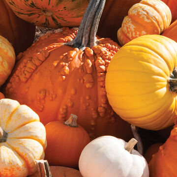 Show-Stopping Pumpkins