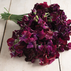 Midnight Sweet Peas