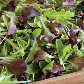 Encore Lettuce Mix Lettuce Mixes