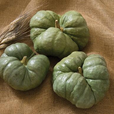 Triamble Specialty Pumpkins