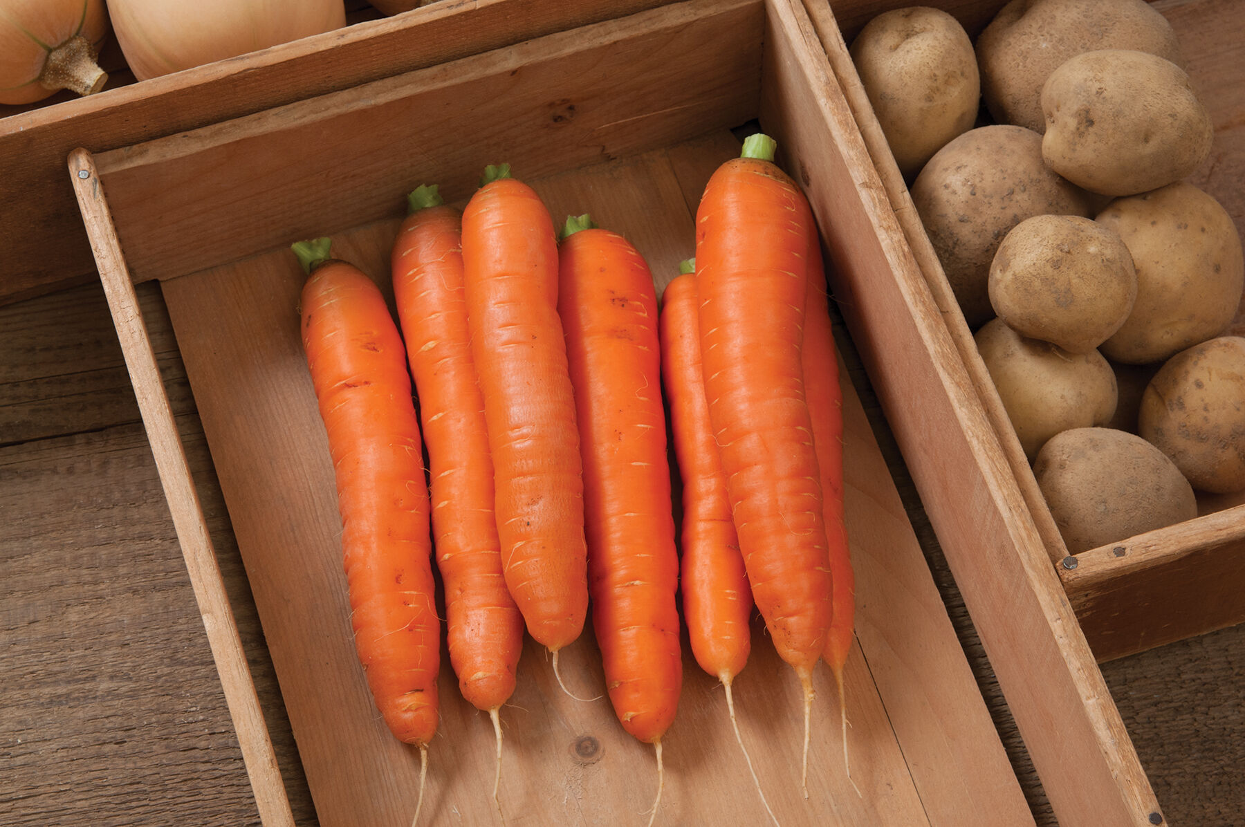 Carrot. Varieties for food, storage and processing 65