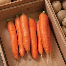 Bolero Storage Carrots