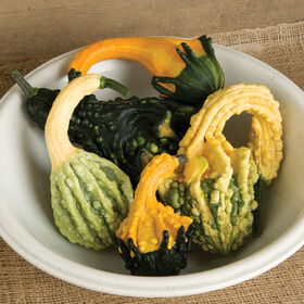 Autumn Wings Blend Gourds