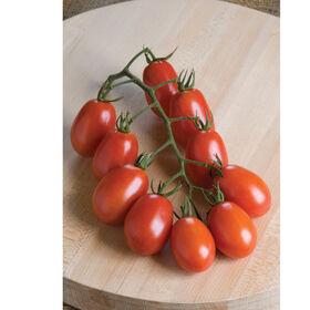 Verona Paste Tomatoes