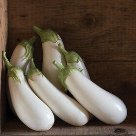Aretussa Italian Eggplants