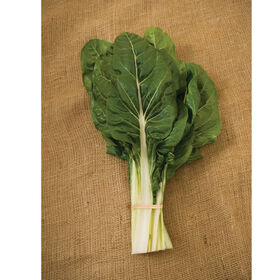 how to cut back swiss chard
