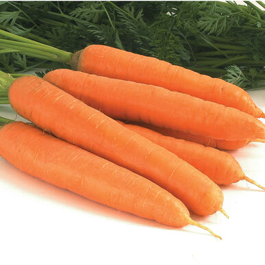 Negovia Main Crop Carrots