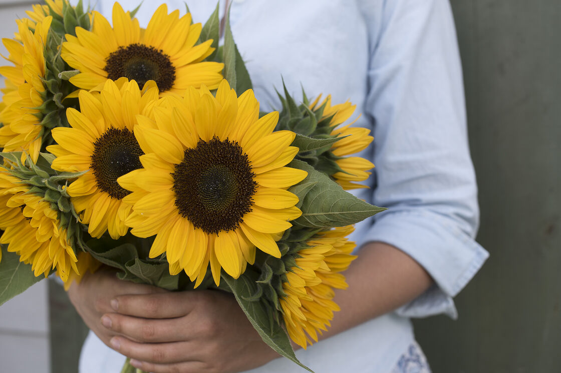 sunflower hindu dating site Register for free on our trusted hindu dating site & see your matches of hindu singles meet local hindus that connect w/ you on 29 levels of compatibility.
