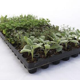 植物草药收集草药插头