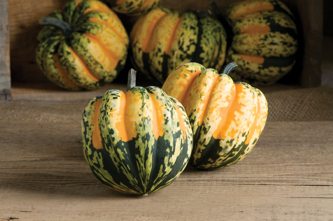 Carnival - (F1) Squash Seed | Johnny's Selected Seeds