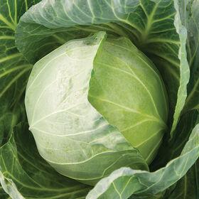 第一优势市场新鲜的卷心菜