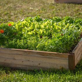 Raised Garden Bed Raised Garden Beds