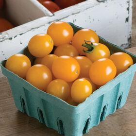 黄色迷你樱桃西红柿