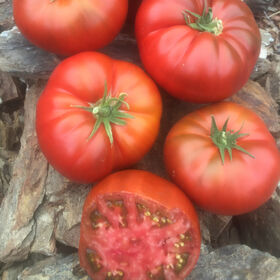 Tasmanian Chocolate Slicing Tomatoes