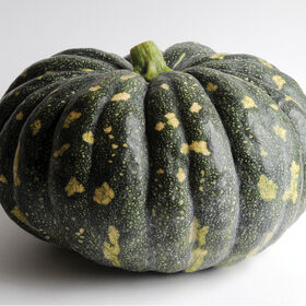 Bliss Specialty Pumpkins