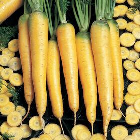 黄石色胡萝卜