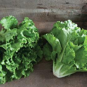 Fusion Romaine Lettuce (Cos)