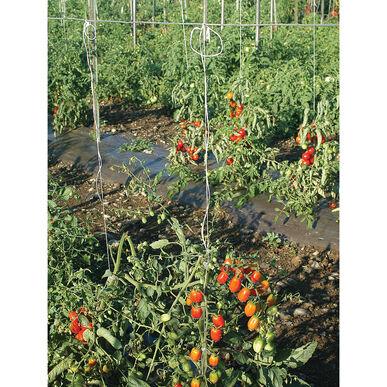 Tomato Twine - 1,000 Ft.