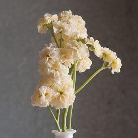 Stock seeds johnnys selected seeds quartet yellow mightylinksfo