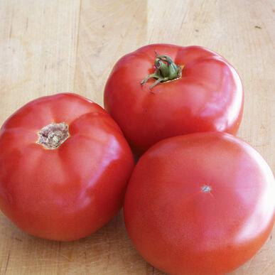 BHN 589 Beefsteak Tomatoes