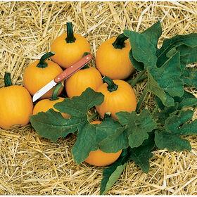 Wee-B-Little Specialty Pumpkins