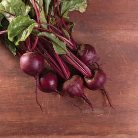 莫内塔(Monogerm)甜菜