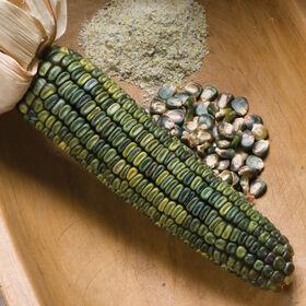 瓦哈卡绿色干玉米