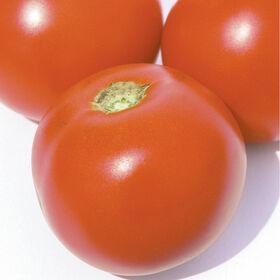 Estiva切片西红柿