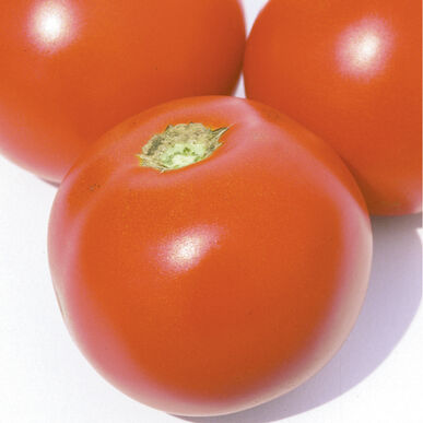 Estiva Slicing Tomatoes