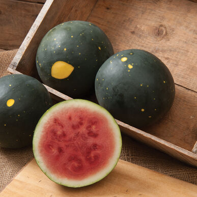 Harvest Moon Triploid Watermelons (Seedless)