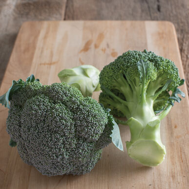 Bay Meadows Standard Broccoli