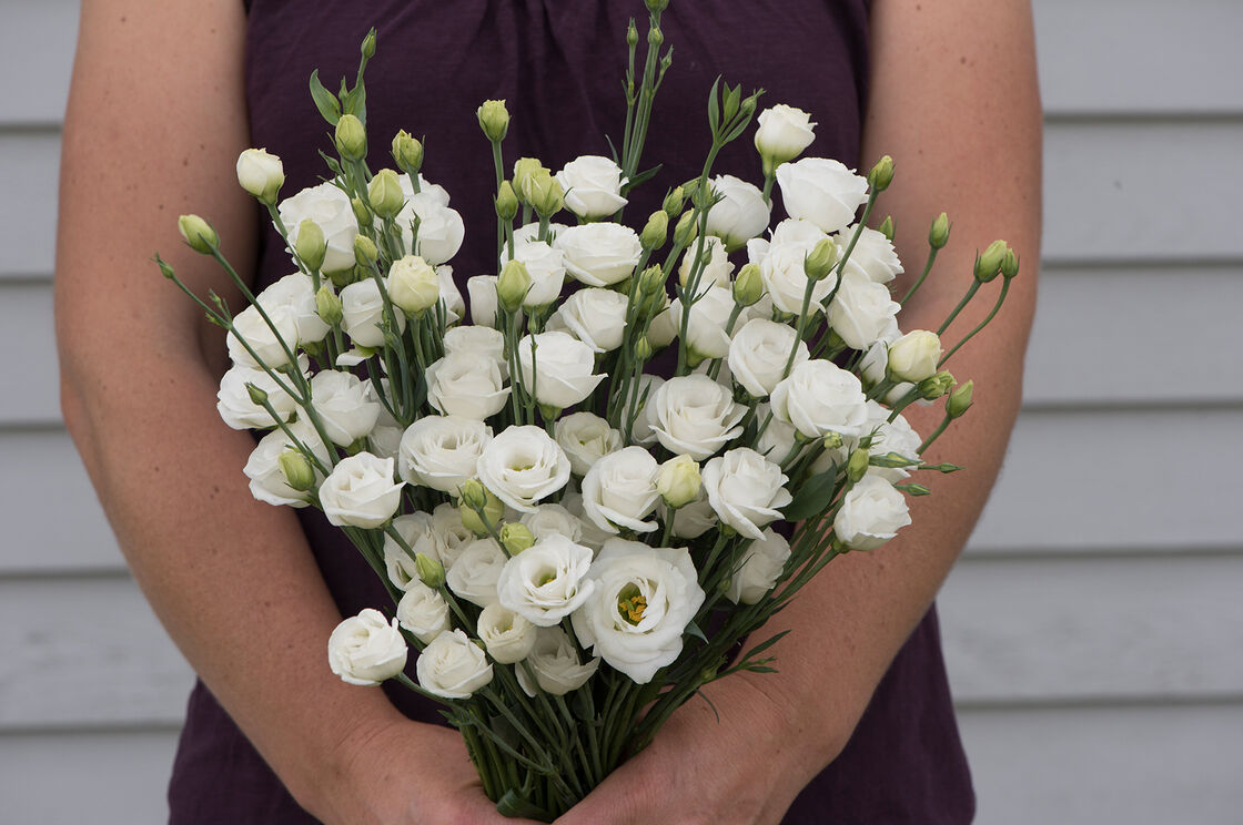 Doublini White Pelleted F1 Lisianthus Seed Johnnys Selected Seeds