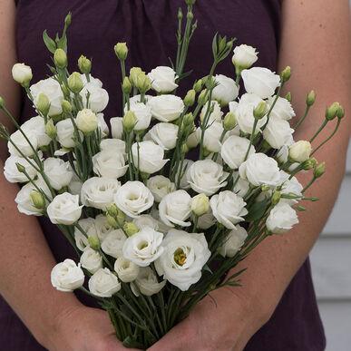 Doublini White