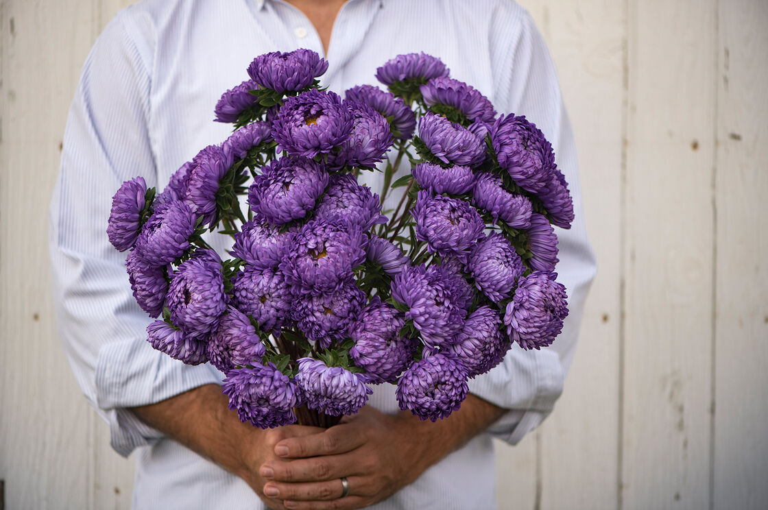 Tower blue china aster seed johnnys selected seeds tower blue aster tower blue aster izmirmasajfo