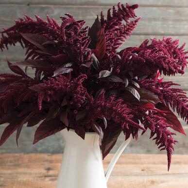 Red Spike Amaranthus