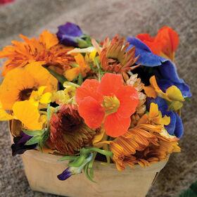 可食用的花收集花集合和混合