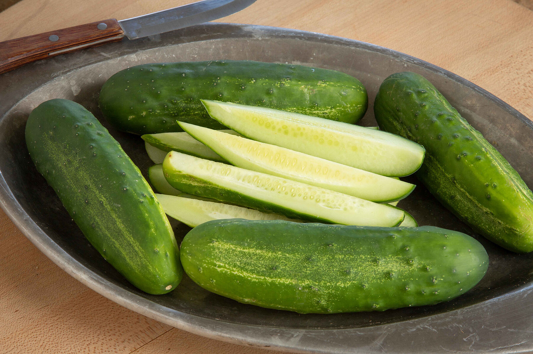 Cucumbers Adam F1: description, features of cultivation, productivity and reviews