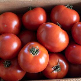 威斯康辛州55切片西红柿